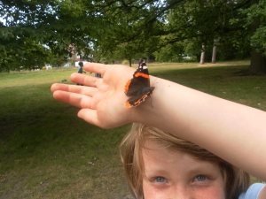 Our Red Admiral friend