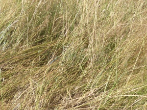 Camouflage- can you spot the Dragonfly?